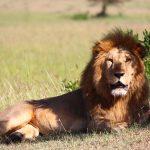 世界最強の動物は!?アフリカBIG5たちとは??ラクダのコブの正体は?