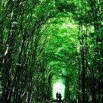 佐賀にあった観光地!松のトンネル「虹の松原」
